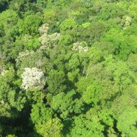 Hutan Dataran Rendah